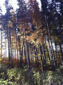 Wald Gut Jägerhof