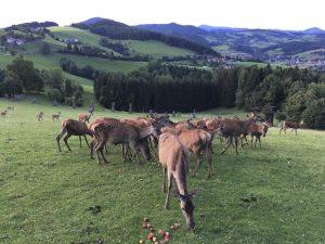 Wildgehege Gut Jägerhof